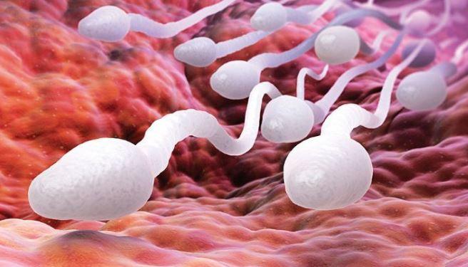 Infertilidad | Embarazo